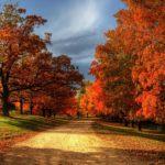 Английская осень — в чем разница между Autumn и Fall?