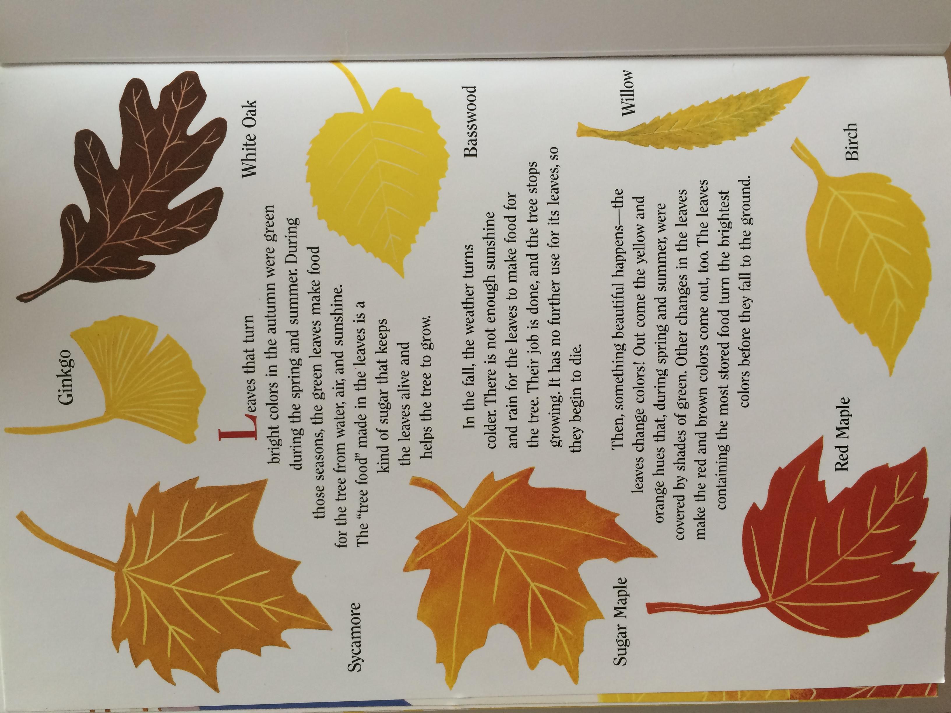 осенние листья картинки с названиями деревьев